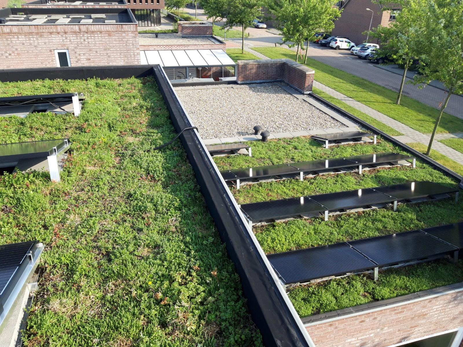 groen dak met zonnepanelen in Terneuzen