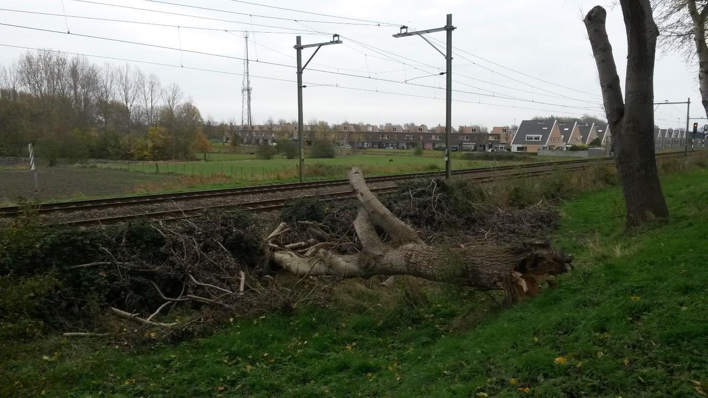 Omgevallen boom Vogeldijk