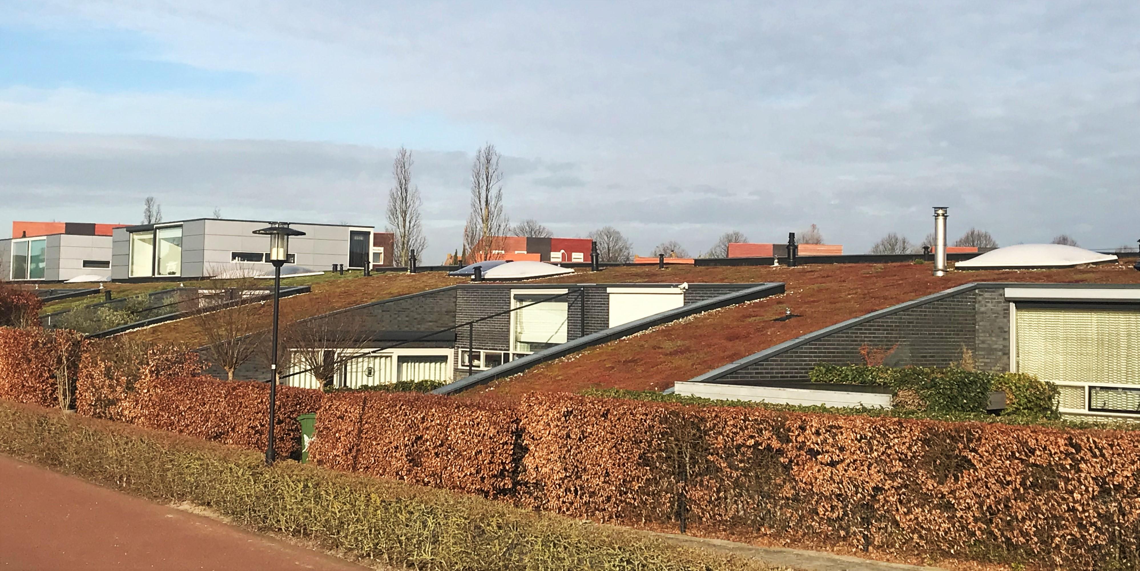 Groene daken Middelburg