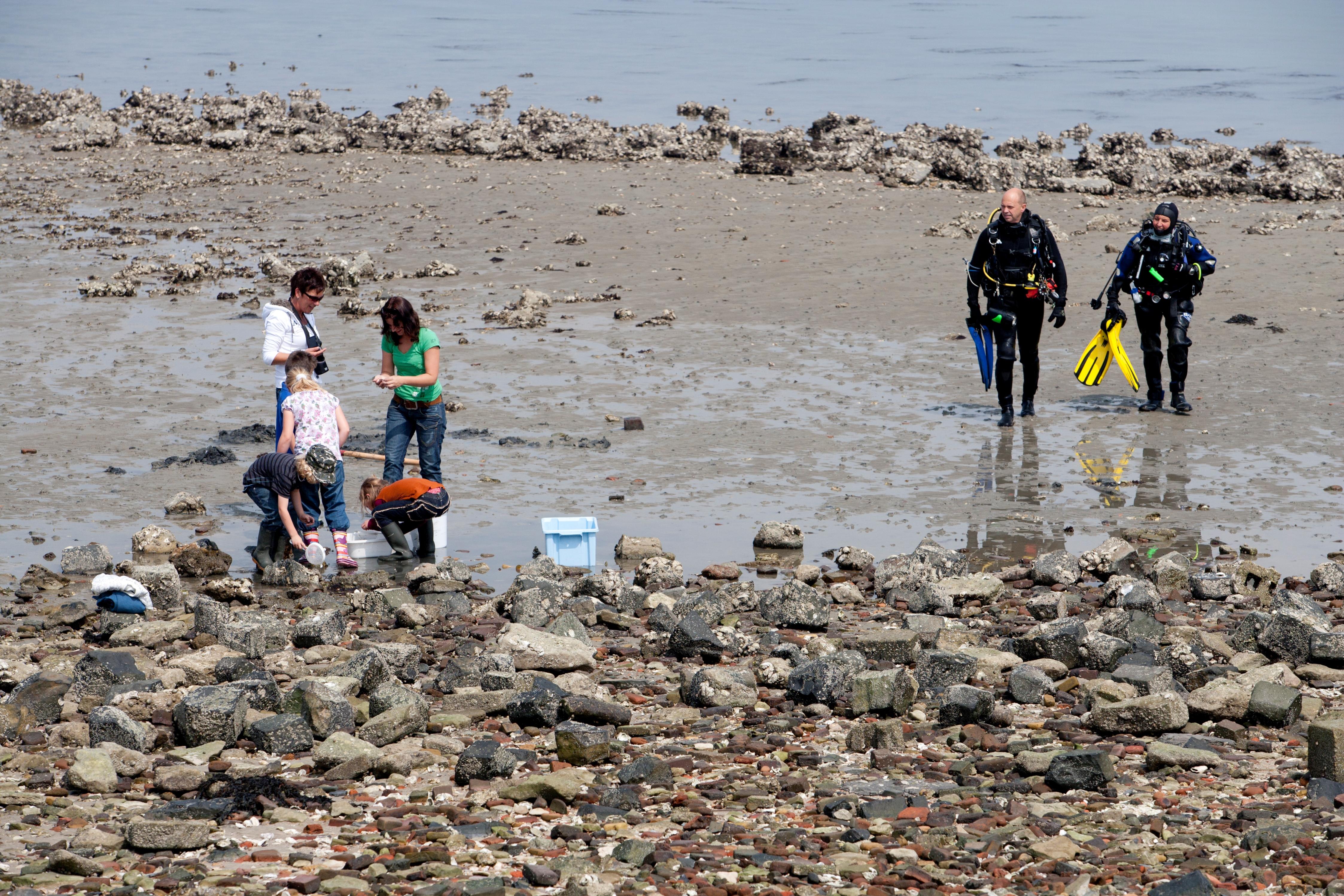 Duikers bij strandje Goese Sas