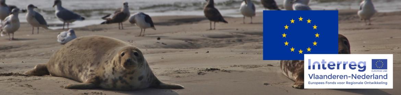 Zeehond op zandplaat, in combinatie met EU en Interreg logo
